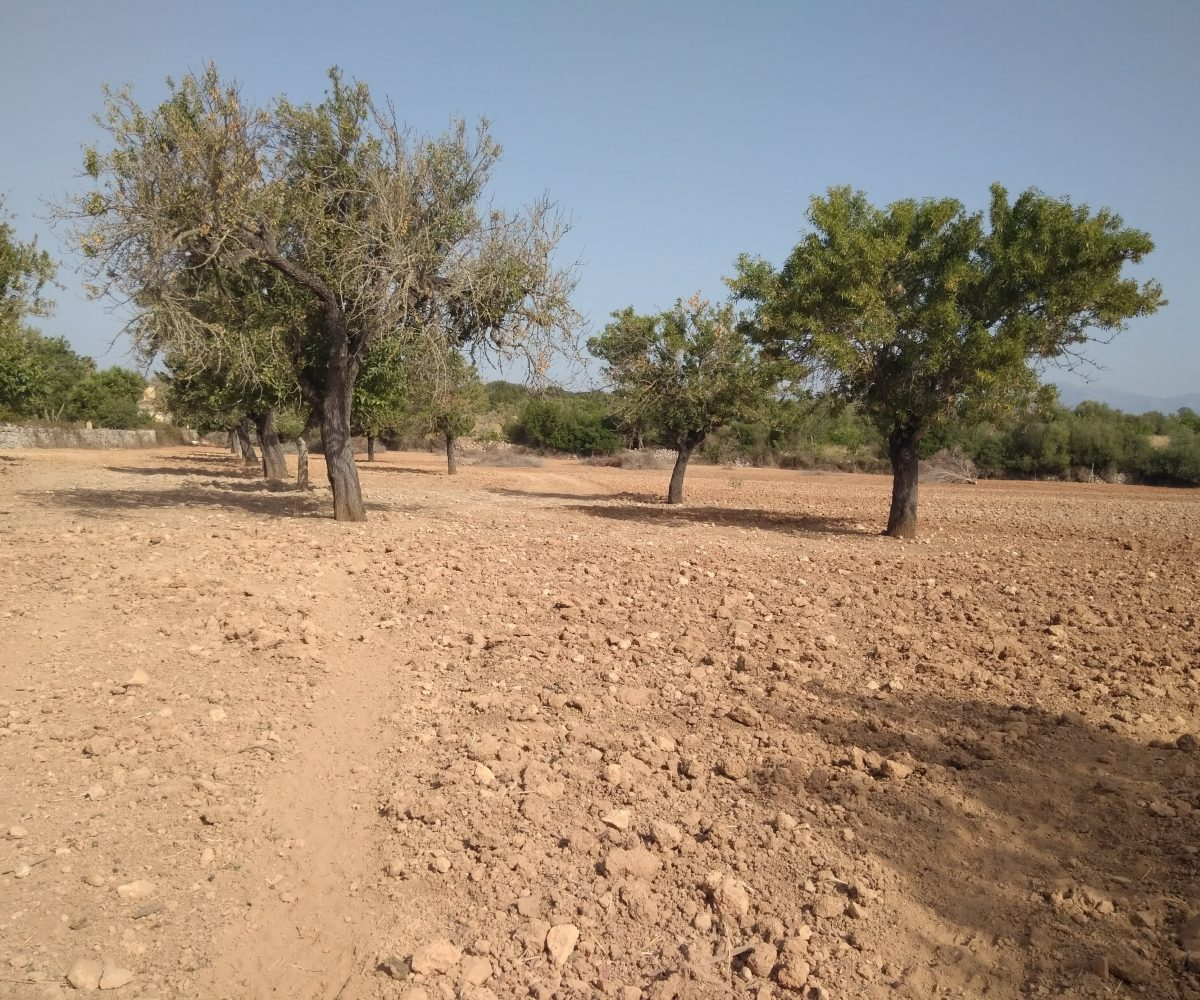 Terreno y Árboles