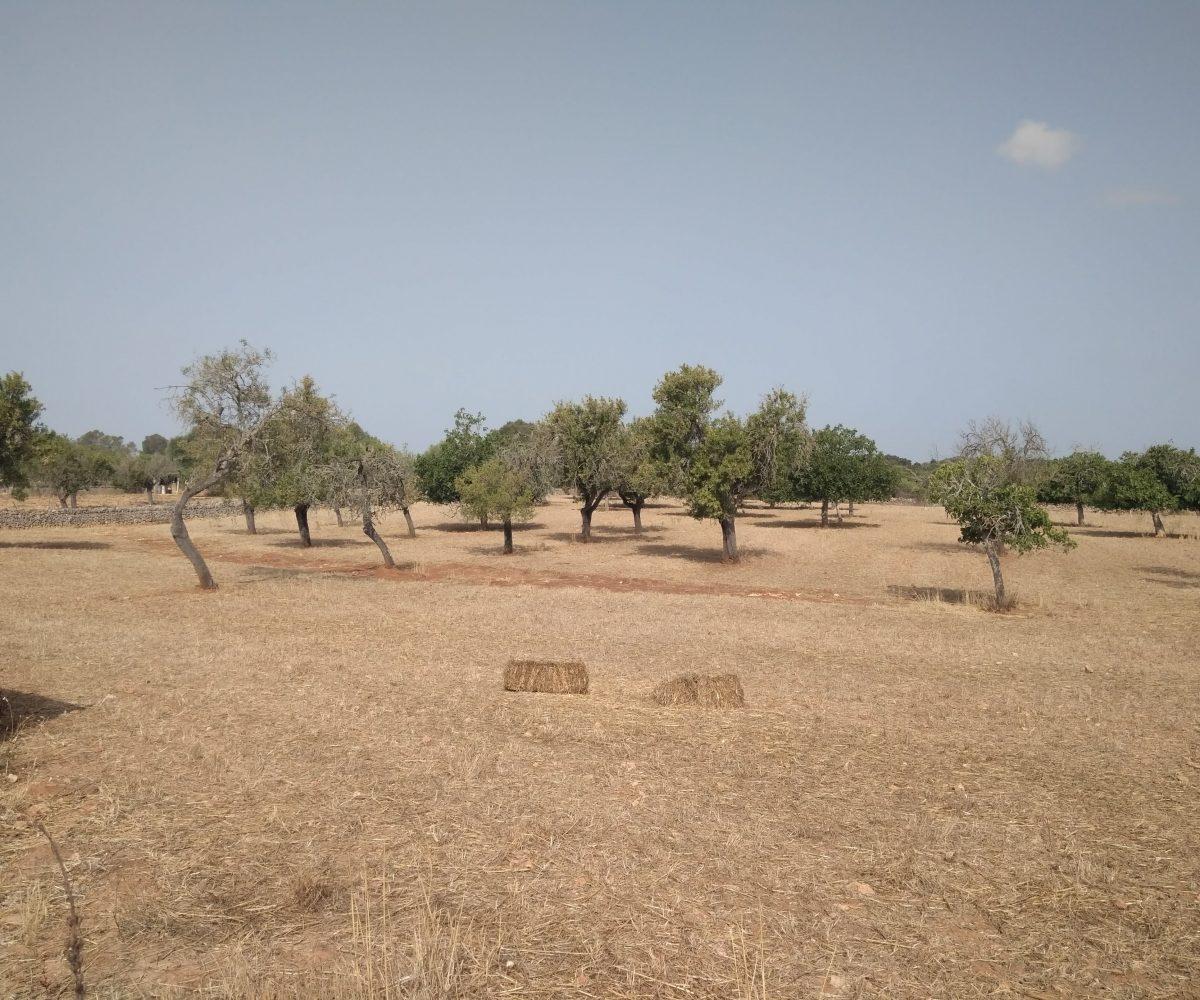 Vista Terreno y árboles